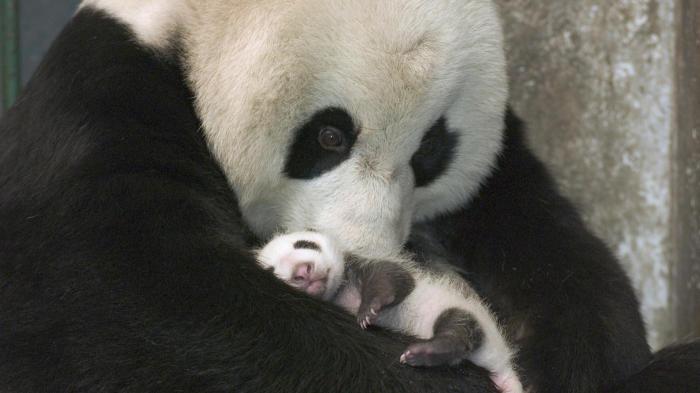 Активация размножения вымирающих видов животных.