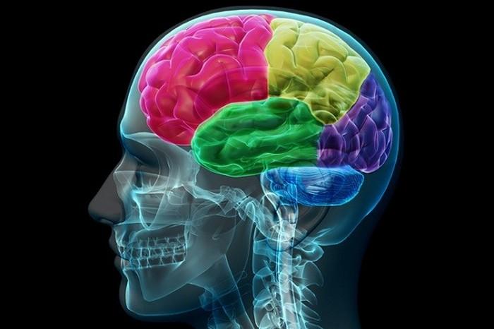Люди используют большую часть своего мозга.