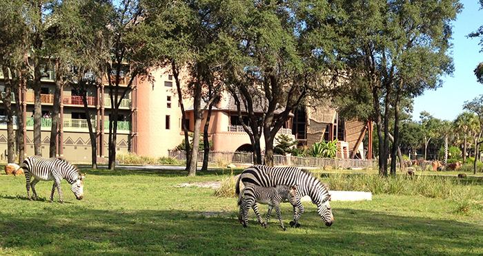 Тематический парк развлечений и зоопарк «Царство животных Диснея» в Бэй-Лэйке, США