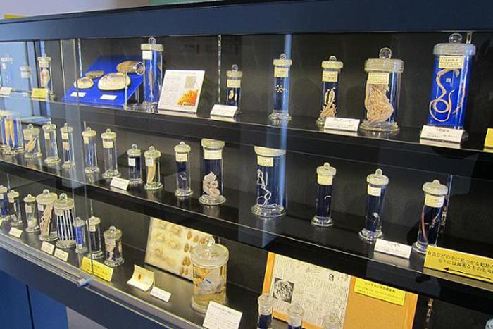 Музей паразитологии Мэгуро в Токио, Япония