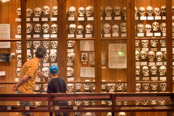 Музей медицинской истории Мюттера в Филадельфии, США