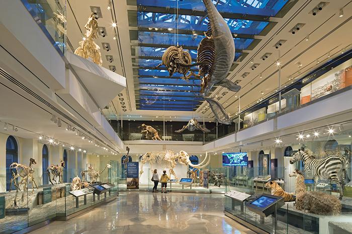 Museum_of_Natural_History2.jpg