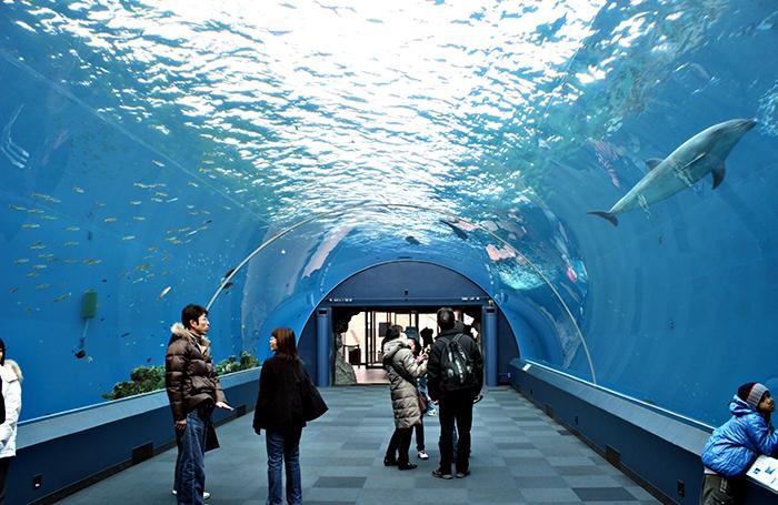 Тематический водный парк «Морской рай Хаккейдзима» в Йокогаме, Япония