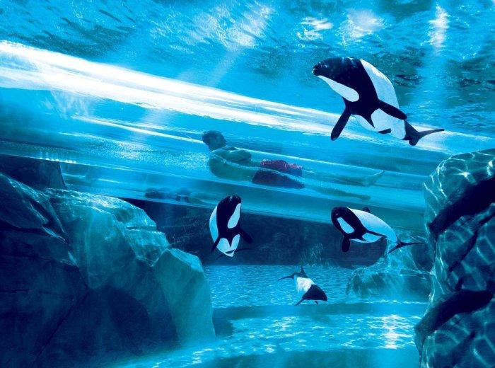 Бассейн с акулами, который находится в отеле Atlantis The Palm Hotel, расположенном в крупнейшем городе Объединённых Арабских Эмиратов - Дубае.