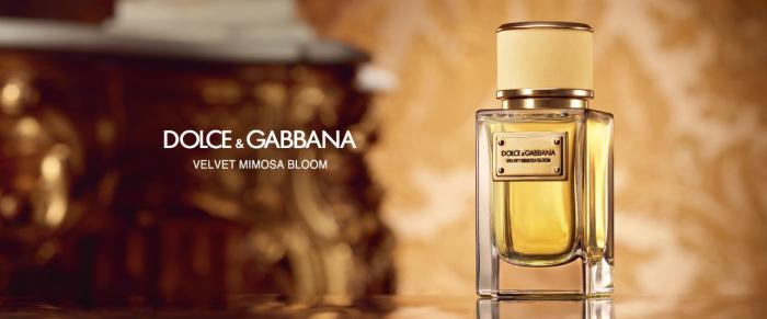 «Velvet Mimosa Bloom» - новый цветочный аромат от известного дома моды Dolce & Gabbana.