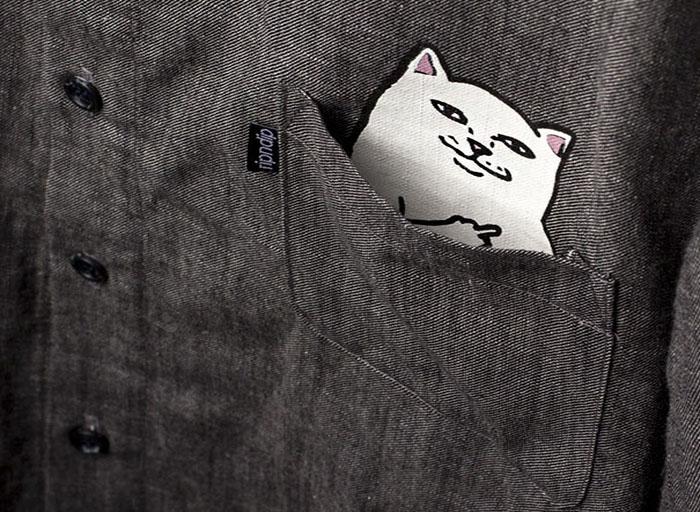 Кот в кармане.