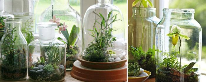 Необычная идея - поместить комнатные растения в стеклянные банки и бутылки.