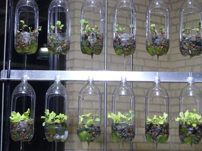 Домашний сад можно сделать и с помощью обычных пластиковых бутылок.