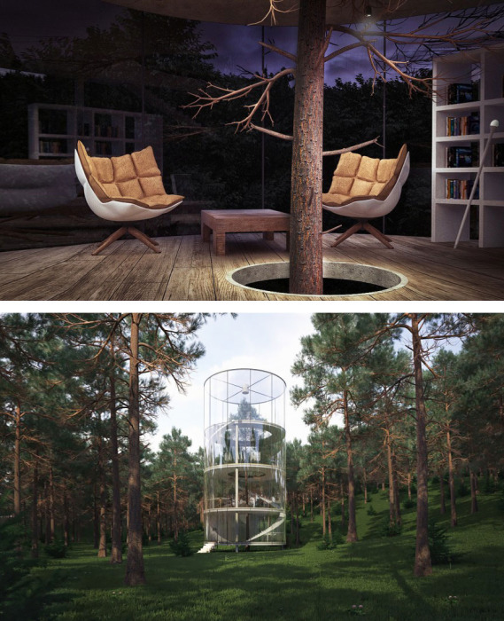 В Алматы архитектор Айбек Алмасов построил вокруг сосны уютный стеклянный дом.