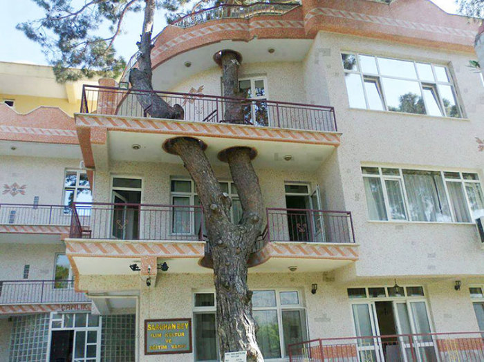 В Турции старинное дерево, которому уже более трех веков, провели через балконы и крышу постройки.