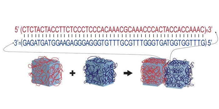 Клей с искусственной ДНК