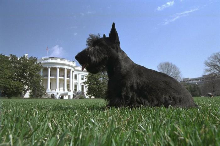 Вarney Cam – серия фильмов про собак Джорджа Буша