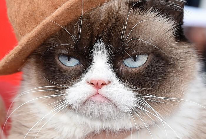 Grumpy Cat - самый известный в мире кот