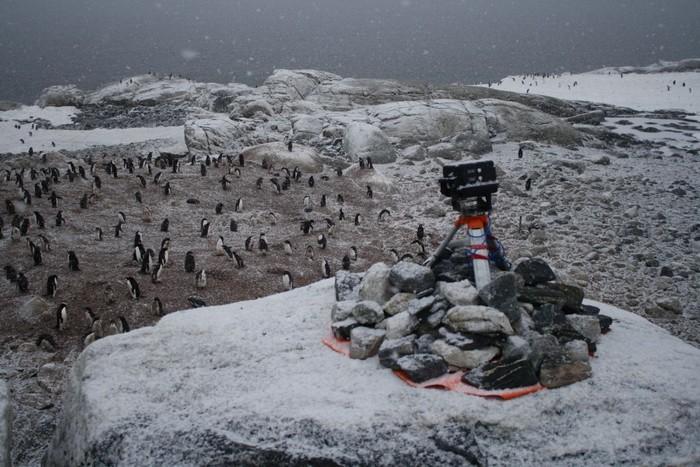Вакансия счетчика пингвинов в Антарктиде от Оксфорда
