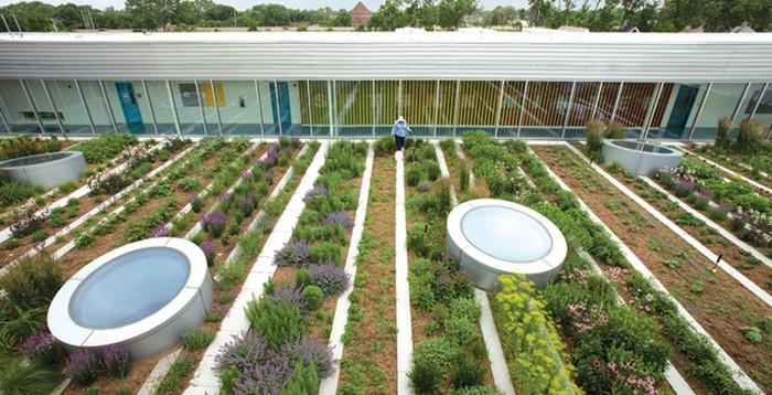 Огород на крыше молодежного центра