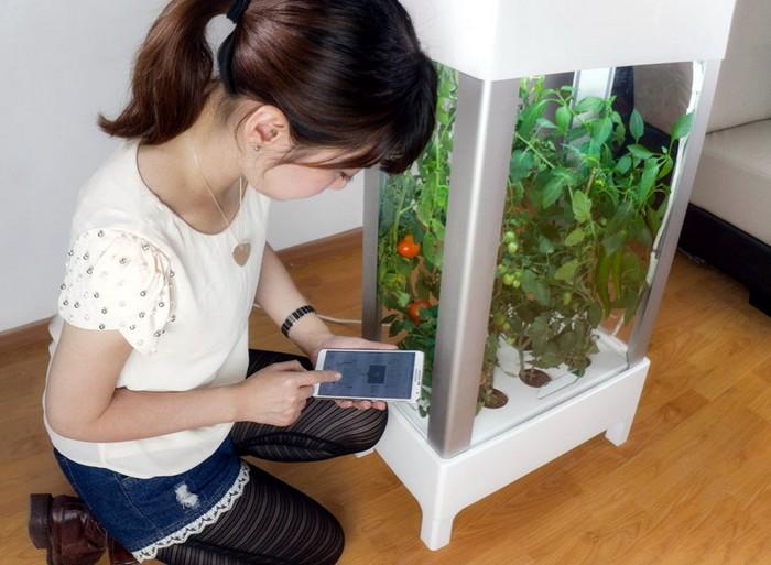 Домашний огород Niwa под управлением смартфона