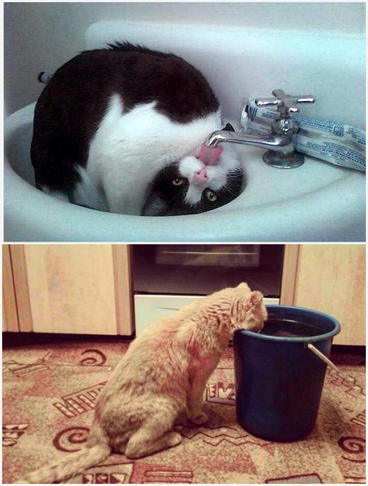Вкусная вода.
