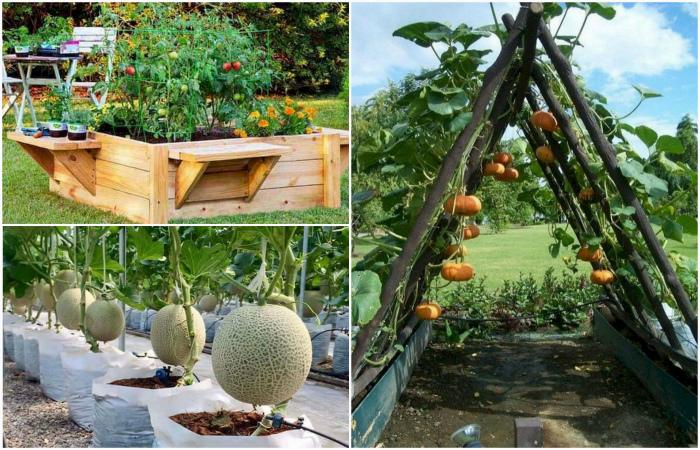 Аккуратные и доступные идеи создания высоких грядок в саду.