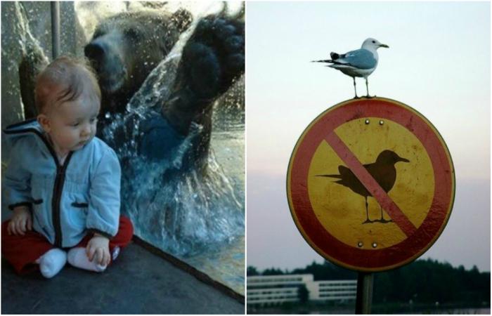 Забавные люди и животные, которым плевать на правила и мнения окружающих.