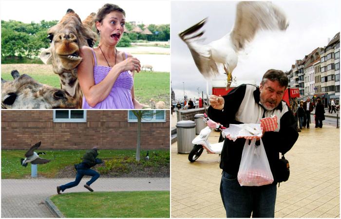 Забавные снимки о сложных отношениях между людьми и животными.