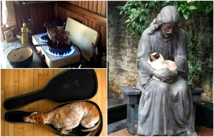 Животные, найденные в необычных местах.