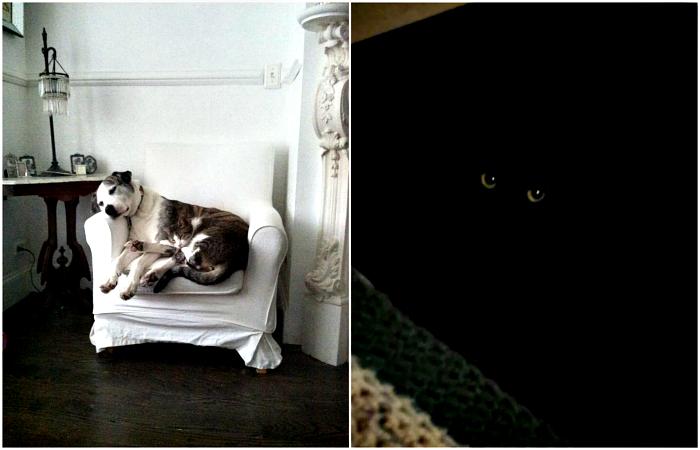 Хитрые коты, найти которых смогут только самые внимательные.