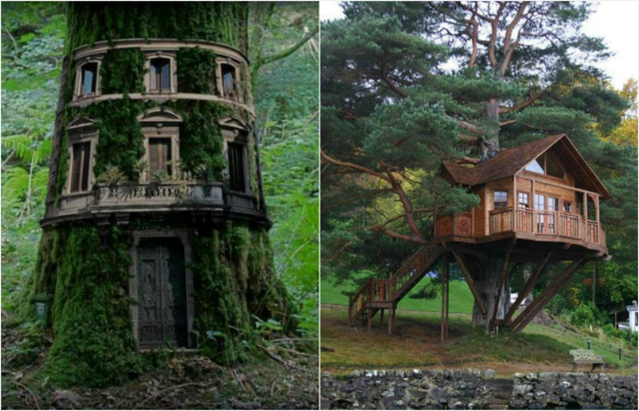 Самые красивые дома на деревьях.