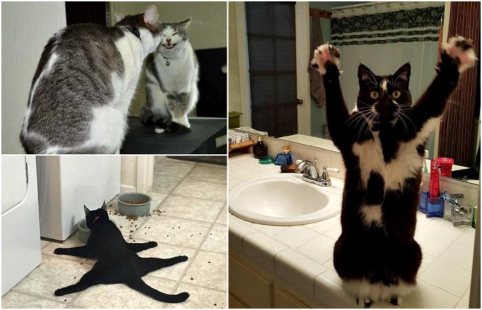 Коты, которые ведут себя более, чем странно.