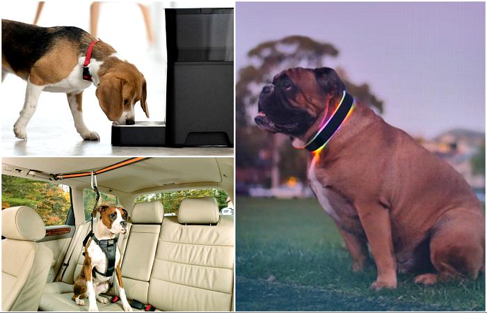 Удивительные изобретения для собак и их владельцев.