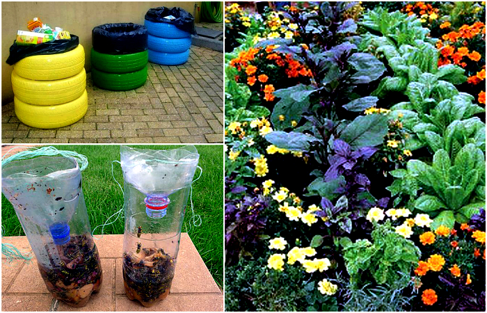 Полезные советы для дачников и садоводов.