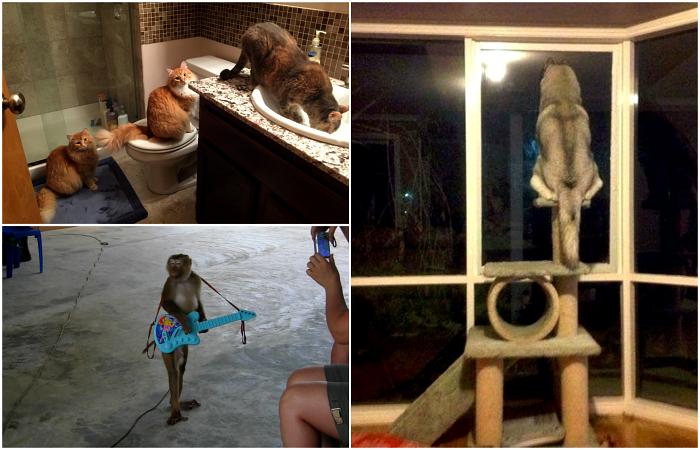 Забавные выходки домашних животных.