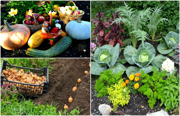 Грамотное соседство, которое поможет увеличить урожай в конце года.