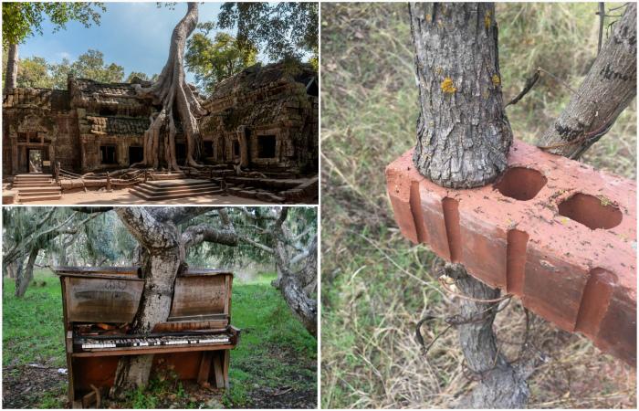 Деревья, которые выжили несмотря ни на что.