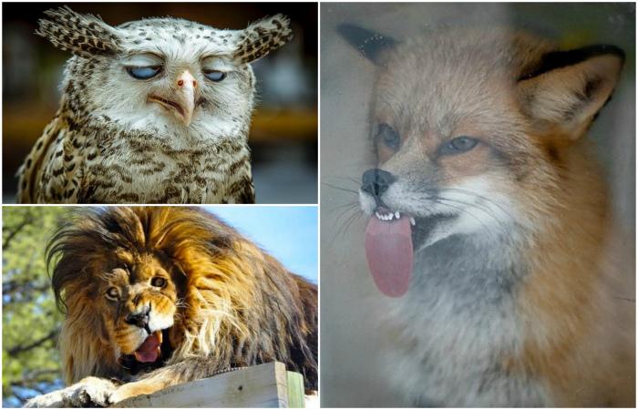 Смешные животные и их неподдельные эмоции.