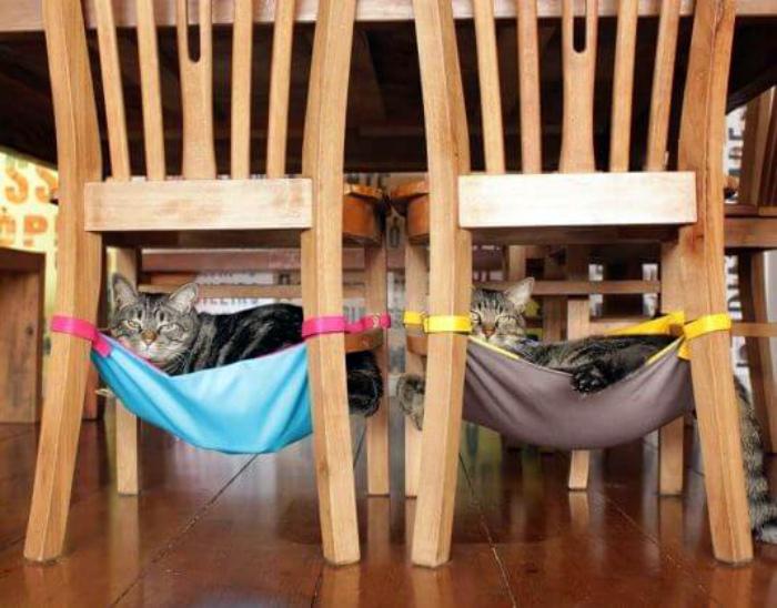 Гамаки для котов. | Фото: Pinterest.