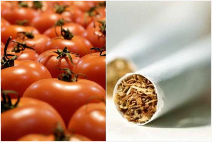 Высокое содержание никотина в овощах.