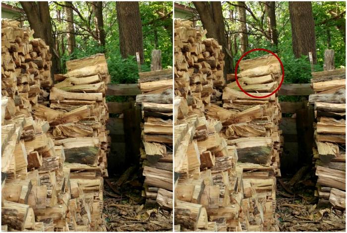 фото найди кота в дровах