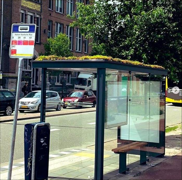 Зеленая автобусная остановка. | Фото: http://press24.net.