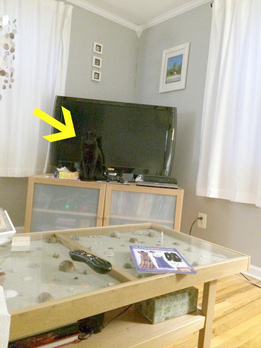 Подсказка от Novate.ru: черный кот где-то на черном.