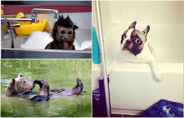 Забавные животные, которые принимают ванну, и им это явно нравится.