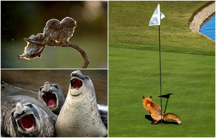 Уморительные фотографии птиц и животных.