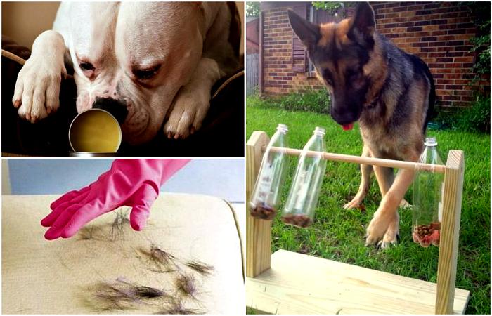 Небольшие хитрости, о которых стоит знать всем владельцам собак