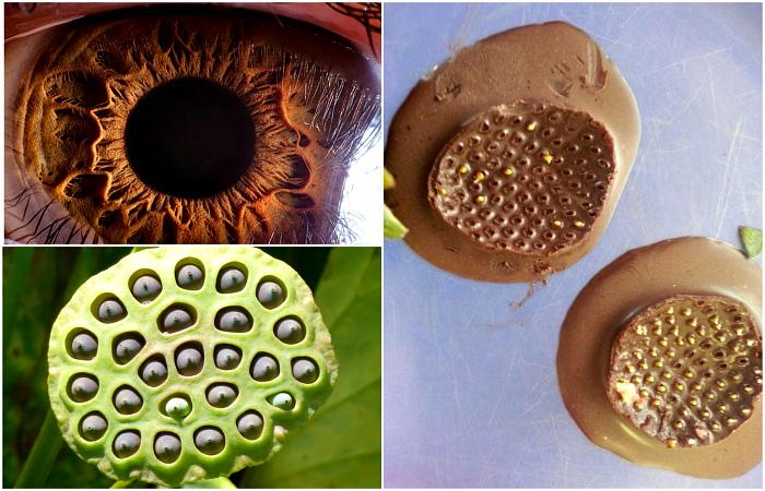 Фотографии, которые докажут, что вы страдаете трипофобией.