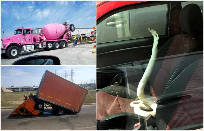 Курьезные случаи, которые удалось запечатлеть из окна автомобиля.