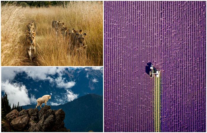 Завораживающие фотографии, которые заставляют смотреть на мир иначе.