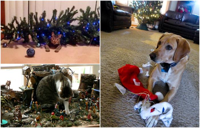 Животные, которые мастерски уничтожают праздничную атмосферу.