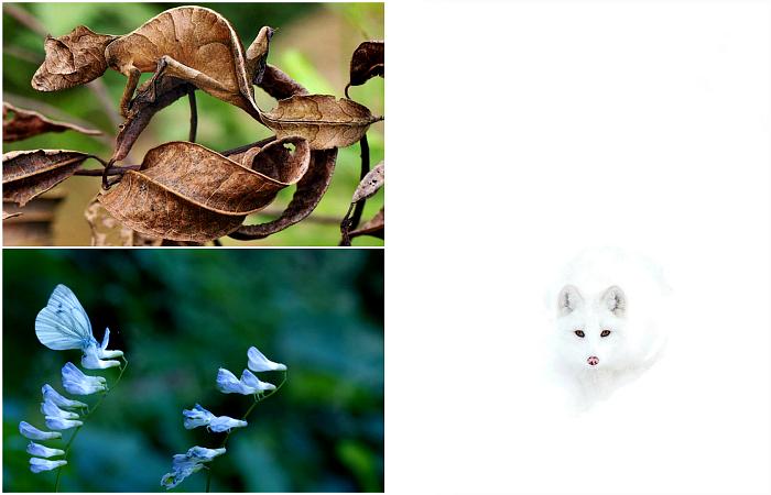 Представители фауны, которые познали все таинства маскировки.