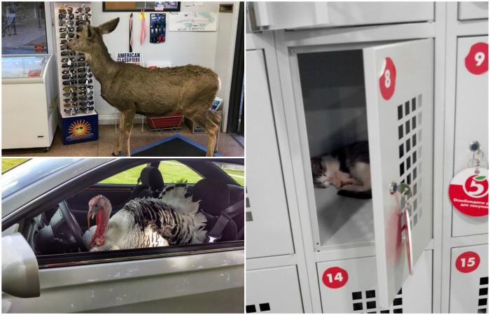 Животные, которые умеют появляться внезапно и эффектно.