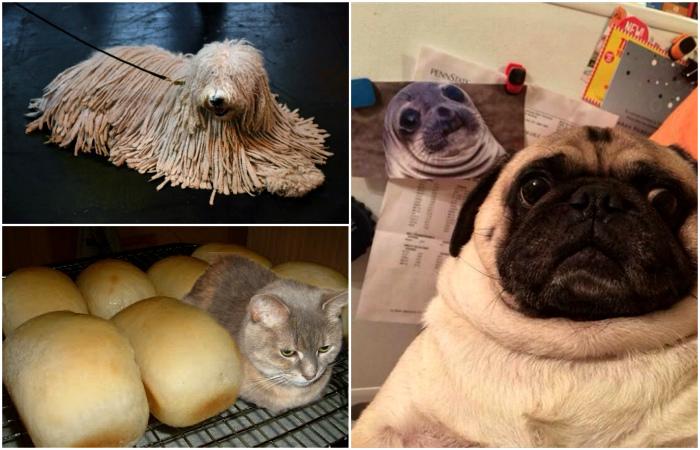 Забавные животные, познавшие науку перевоплощения.