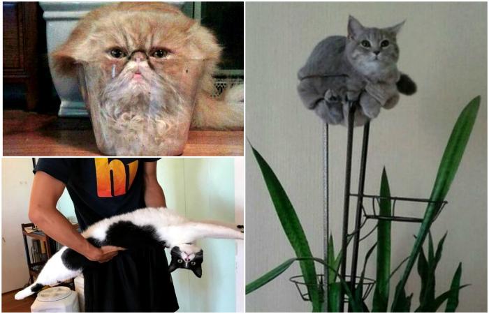 Немного коты, немного инопланетяне.
